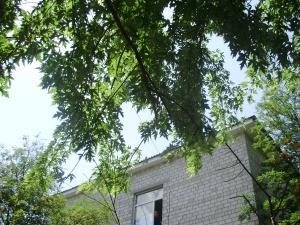 село Софіївська Борщагівка липень 2011 року рейдери ТОВ Домінант плюс в сільській раді 3